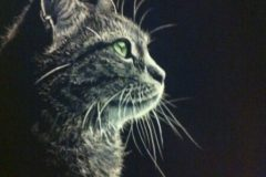 Cat1-e1587183572945
